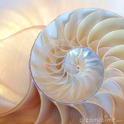 Nautilus shell symmetry Fibonacci half cross section spiral golden ratio structure growth close up back lit mother of pearl close Stock Photo