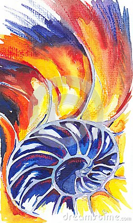 Nautilus Shell. Watercolors drawing
