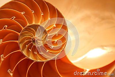 Nautilus łupiny