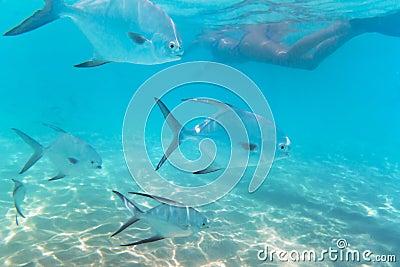 Navigando usando una presa d aria nel mare caraibico del Messico