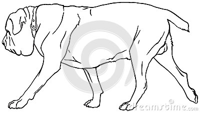royalty free stock photos neapolitan mastiff dog breed italian mastino napoletano vector illustration show sign symbol