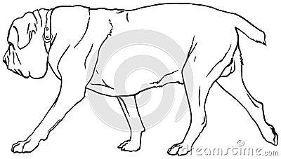 royalty free stock photos neapolitan mastiff dog breed italian mastino napoletano vector illustration show sign symbol