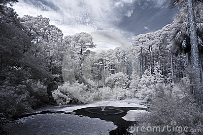 Infrared view of forest and water