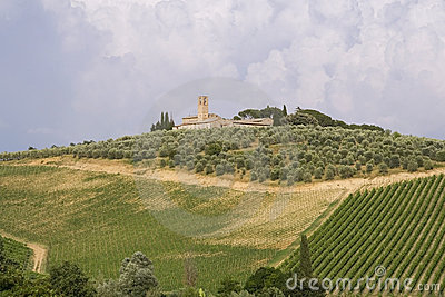 Neat Tuscan vines