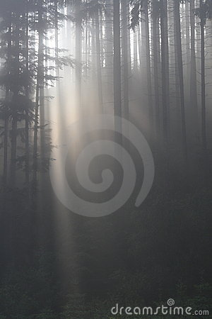 Nebbia in foresta