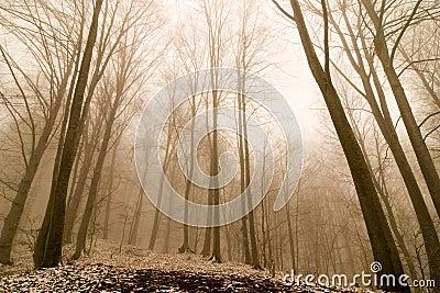 Nebelhafter Wald