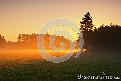 Nebeliger Morgen auf Wiese. Sonnenaufganglandschaft.