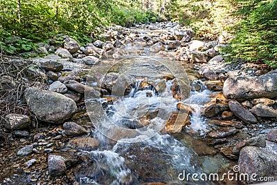 Nebenfluss im Wald
