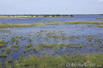 Necedah Wildlife Refuge Wetlands