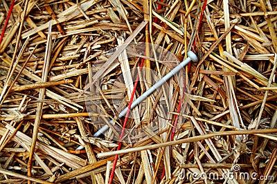 Needle in a Haystack 2