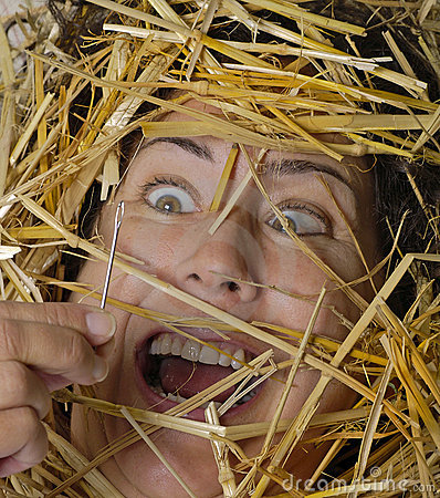 Free Needle In Haystack Royalty Free Stock Image - 357136