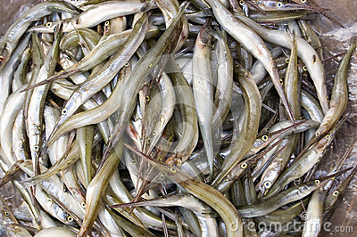 Needlenose Gar fish in a Cambodian Market
