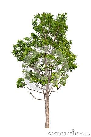 Free Neem Tree (Die Cutting) Stock Photo - 50887190