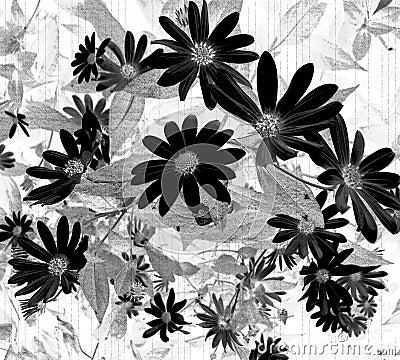 Negative Side Daisy Wallpaper