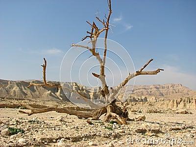 Negev desert.