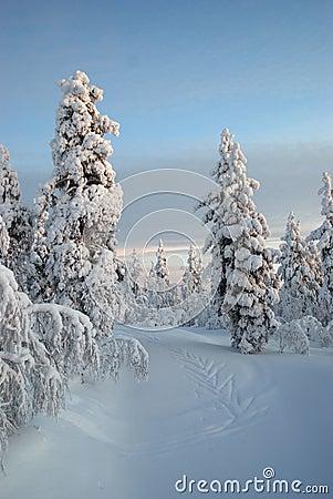 Neige de la Laponie