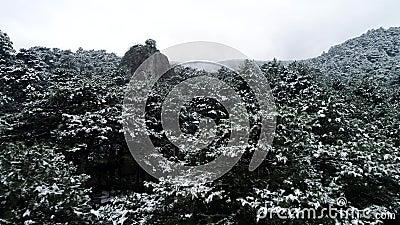 Neige sur les arbres projectile Vue supérieure sur les forêts coniféres foncées de forêt impeccable couverte de neige Forêt conif banque de vidéos