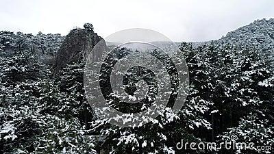 Neige sur les arbres projectile Vue supérieure sur les forêts coniféres foncées de forêt impeccable couverte de neige Forêt conif clips vidéos