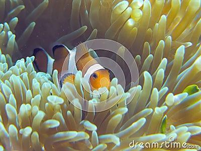 Nemo fish home