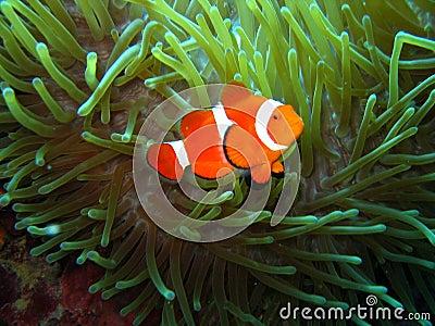 Nemo found