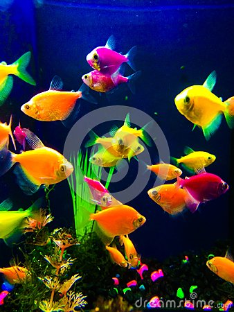 Neon colorful fish aquarium stock photo image 50600222 for Neon aquarium