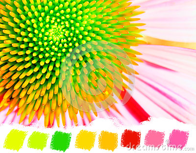 Neon echinacea or purple coneflower color palette