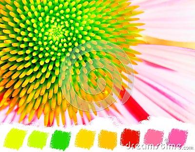 Neon echinacea or purple coneflower color palette