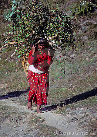 Nepali woman carrying forage back to her village Editorial Image