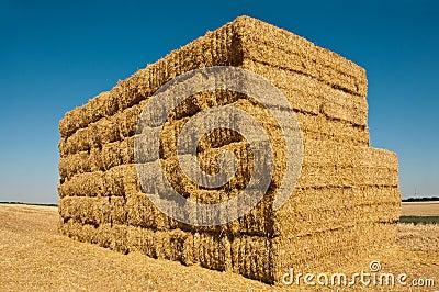Nerd wheat