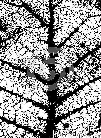 Nervures de lame