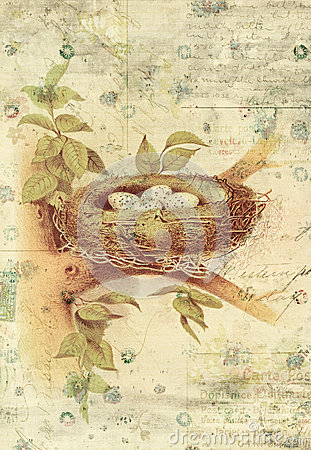 Free Nest And Bird Eggs Botanical Vintage Style Wall Art With Textured Background Royalty Free Stock Images - 30809059