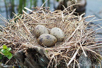 Nest with Cardinal Egg