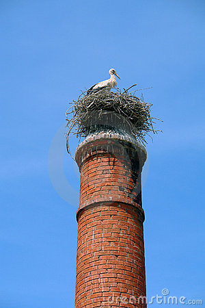 Nest in the chimney
