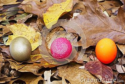 Nest Egg Choices