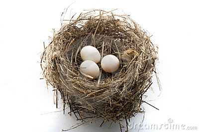 Nest and eggs