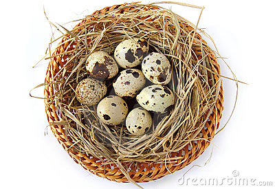 Nest With Quail Eggs Royalty Free Stock Images - Image: 16231449
