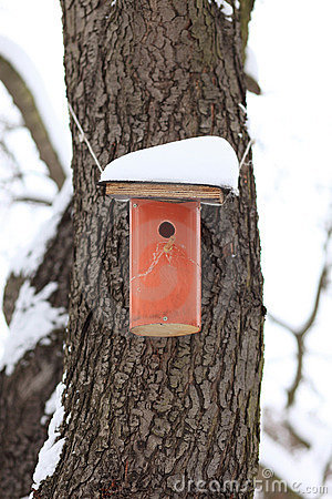 Nesting Box Covered by Snow
