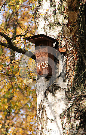 Free Nesting Box On The Birch Royalty Free Stock Image - 79871576