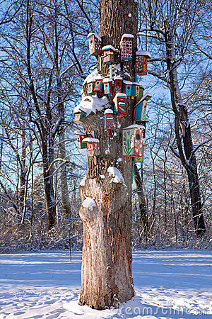 Nesting-boxes on the tree