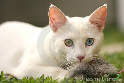 Nette Katze mit Spielzeugmaus