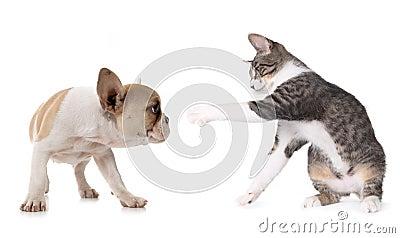 Netter Welpen-Hund und Kätzchen auf Weiß