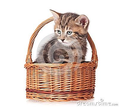 Nettes Kätzchen