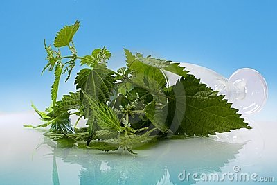 Nettles in the glass