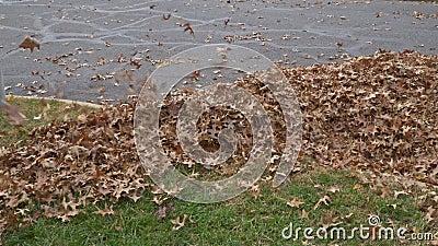 Nettoyage des feuilles d'automne de feuillage en hauteur clips vidéos