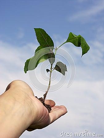 Neues Wachstum #2