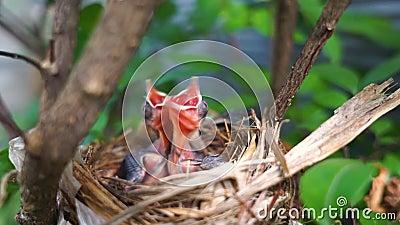 Neugeborenes Vogelbaby im Nest
