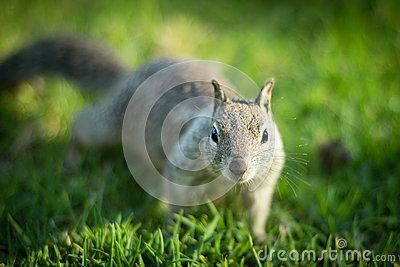 Neugieriges Eichhörnchen