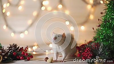 Neujahrskonzept Rutsch weiße Hausratte im Neujahrsdekor Symbol des Jahres 2020 ist eine Ratte stock video footage