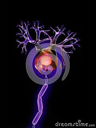 Neuron on black