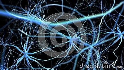 Neuron network with electric impulse. Flight through brain. Popular-science 3D animation